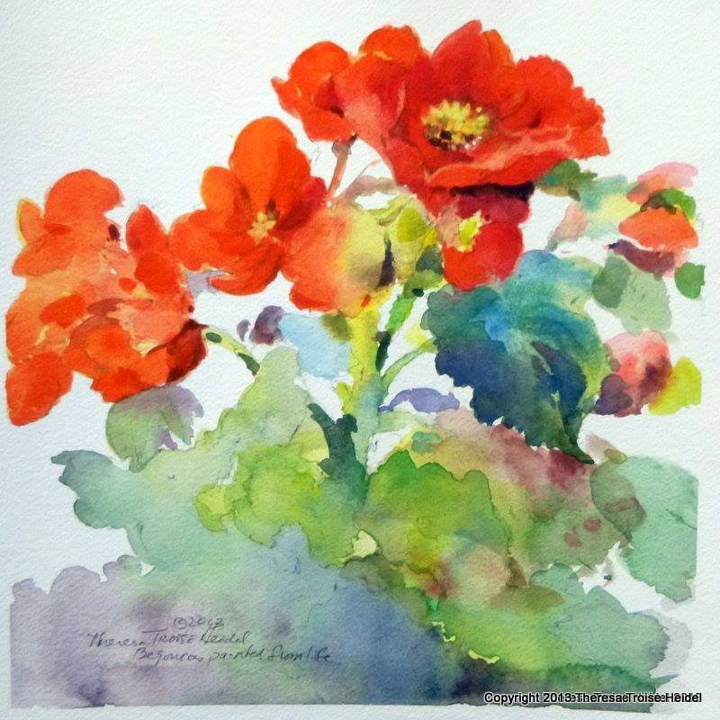 Begonias Painted from life
