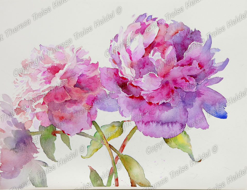 Peonies II, painted from life