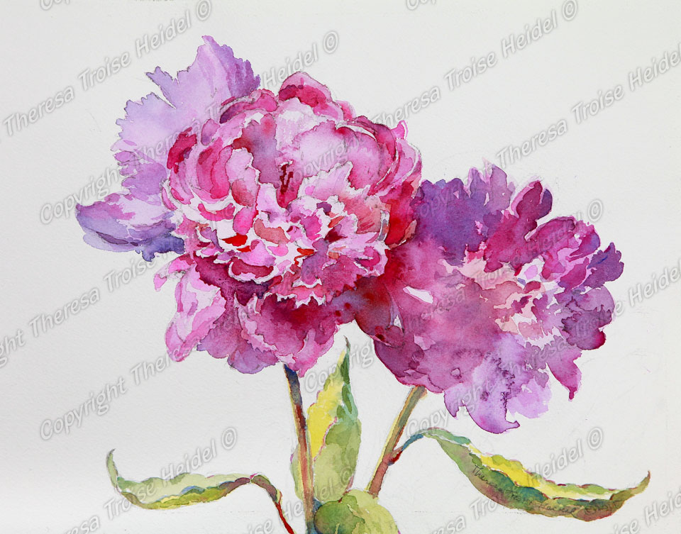 Peonies, painted from life