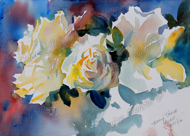 White Roses, painted from life