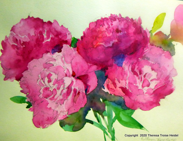 "Peonies, painted from life,,unmatted, 11 and 1/4"" H x 15 and 1/2"" W"